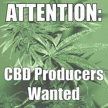 CBD Producers Wanted