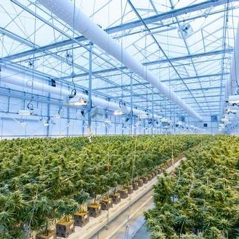 4 Tips for Successful Cannabis Growing Greenhouse
